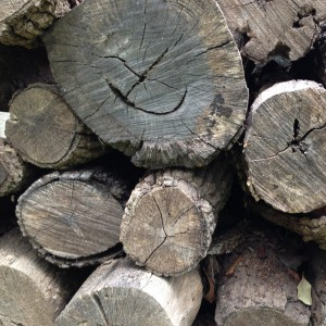 Seasoned hardwood will feel light and make a ringing sound when you whack two pieces together. Look for grayish color at the ends of the logs.  Well cured wood will show cracks and/or radial splits.