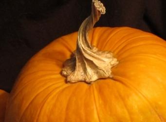 sugar pumpkin for roasting pumpkin or roasting pumpkin in a wood-burning oven pizza oven